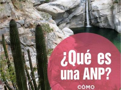 ¿Qué es una ANP?