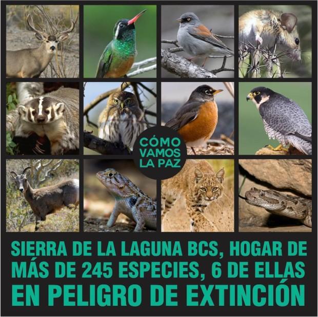 Especies que viven en  La Sierra de la Laguna