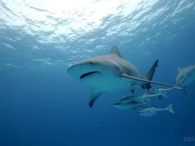 Puerto San Carlos al llamado del tiburón, un regalo de la naturaleza.