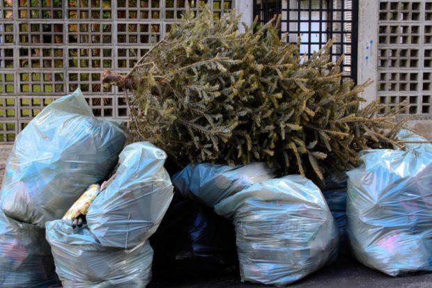 No tendremos centro de acopio para arbolitos navideños este año: Martín Guluarte