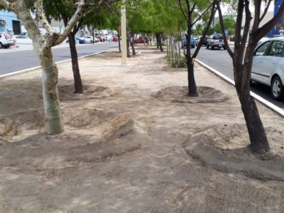 Continúa la limpieza en la ciudad de La Paz: Martín Guluarte Ceseña.
