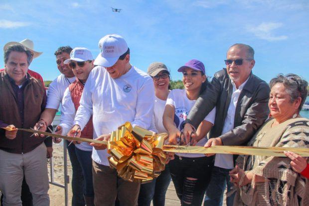 Primer Avistamiento de la Ballena Gris en Puerto Chale